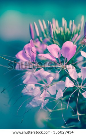 Pink flowers on natural background. Beautiful floral use as background. Shallow depth of field (dof), selective focus. Outdoors. Cross process picture style. - stock photo
