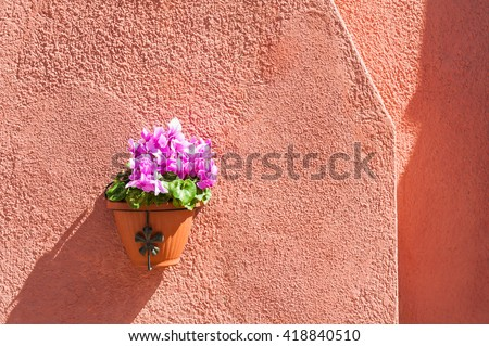 Pink flowers on the red wall of a house. Colorful houses in Burano island near Venice, Italy - stock photo