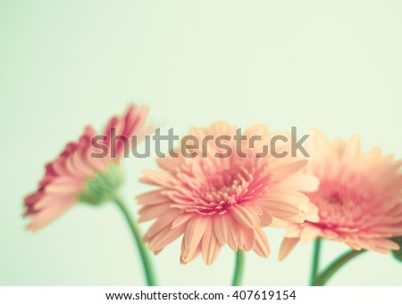 Pink flowers over mint background  - stock photo