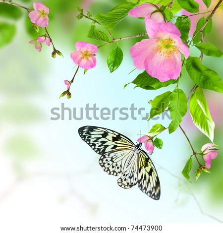 Pink flowers rose on green background with butterfly - stock photo