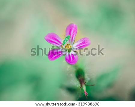 Pink forest flower and small narrow green beetle - stock photo