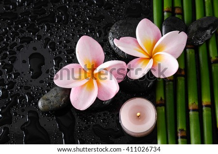 pink frangipani orchid with stones on bamboo grove-wet background  - stock photo