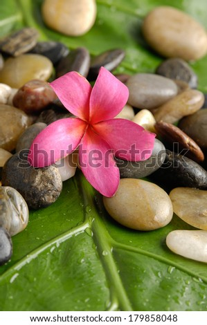 Pink frangipani with pile of stones on wet banana leaf - stock photo