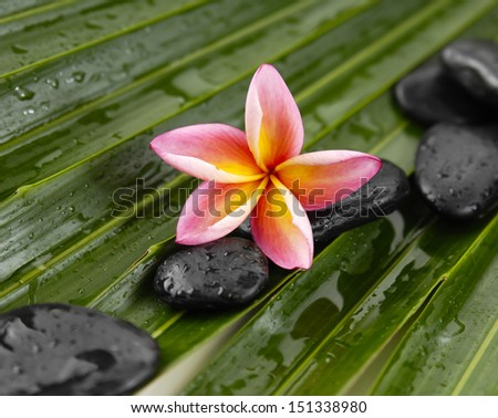 Pink frangipani with spa stones on wet palm leaf texture - stock photo