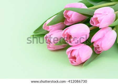 Pink fresh tulips flowers