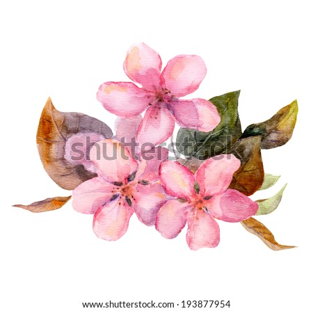 Pink fruit tree flower (apple, cherry, plum, sakura). Watercolour painted art - stock photo