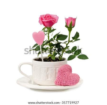 Pink garden roses in a cup and knitted heart are  isolated on a white background