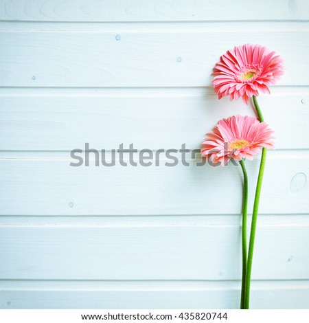 Pink gerber daisy flowers on  wooden background. Gerbera and decorative heart. Flat lay, top view - stock photo