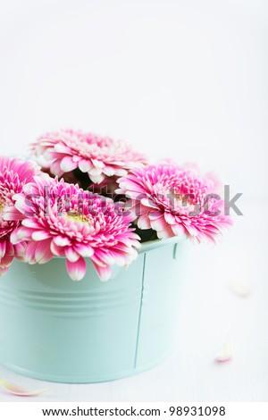Pink Gerbera Flowers in a Pot - stock photo