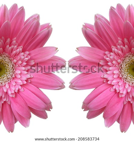 Pink gerbera flowers isolated on white background. - stock photo