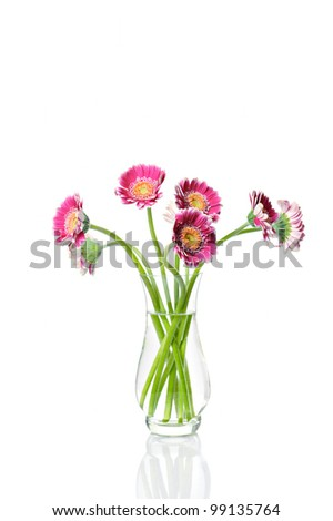 Pink gerbera in vase on white background - stock photo