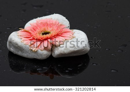 Pink gerbera laying on white rocks and dark wet surface with reflection - stock photo