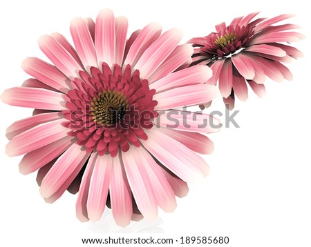 pink  gerberas on a white background - stock photo