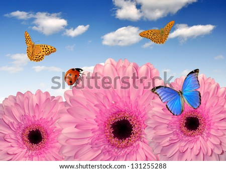 pink gerberas with butterflies and ladybugs - stock photo