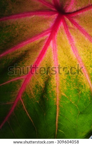 Pink green and yellow autumn leaf texture - stock photo