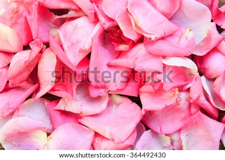 Pink heart on Background the petals of pink roses.