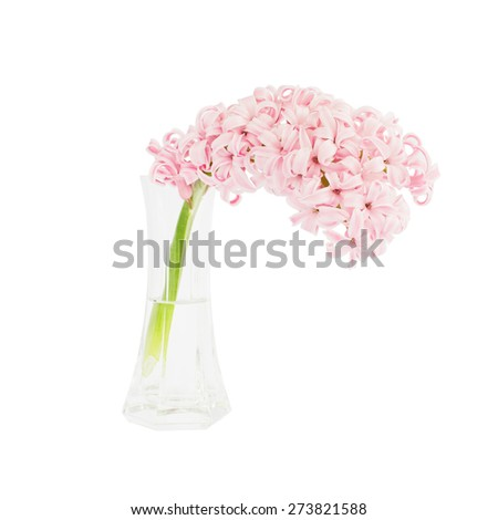 Pink hyacinth in vase, isolated over white - stock photo