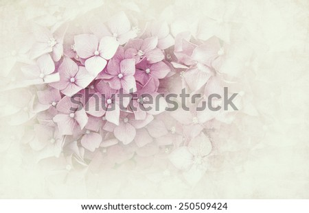 Pink hydrangea background with texture overlay, vintage effect processing. Space for your text. - stock photo