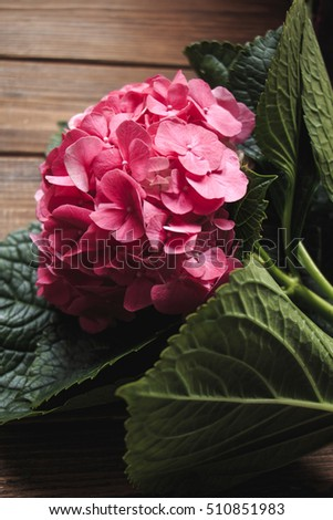 Pink Hydrangea flower (Hortensia or Ortensia). Stylish floral background
