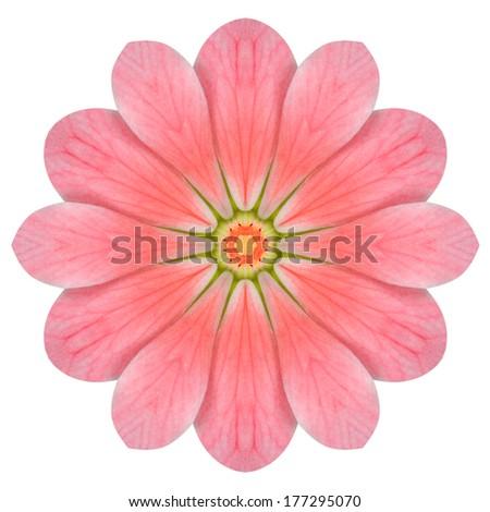 Pink Hydrangea Kaleidoscopic Mandala Flower  Isolated on White Background - stock photo