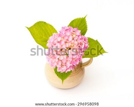pink hydrangea on a white background - stock photo