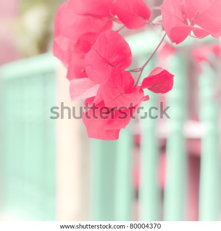 Pink leafs - stock photo