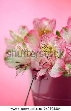 Pink lilies / Alstroemeria / Peruvian lily bouquet in a bucket vase isolated on pink background