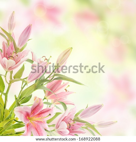 Pink lilies with copy space, floral natural background - stock photo