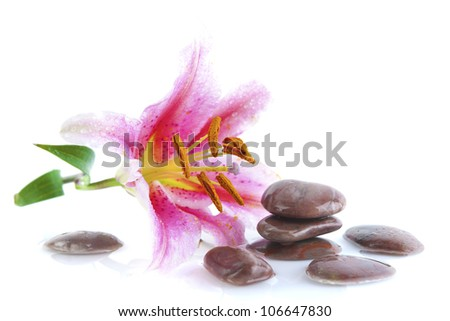 Pink lily and stones, with water reflection