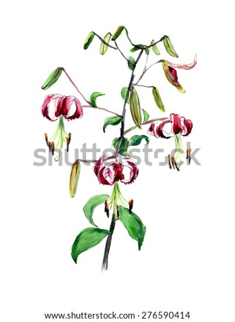 Pink lily. Flower backdrop. Decoration with blooming lilies. Place for your text. Watercolor hand drawn illustration