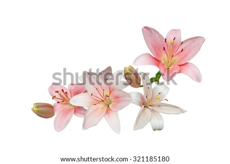 Pink lily flower bouquet isolated on white background - stock photo
