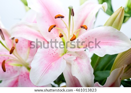 pink lily flower bunch  bouquet
