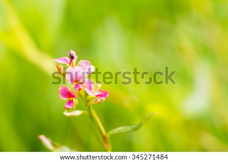 Pink little grass flower with green leaf blurry background:select focus with shallow depth of field:macro shot:ideal use for background. - stock photo