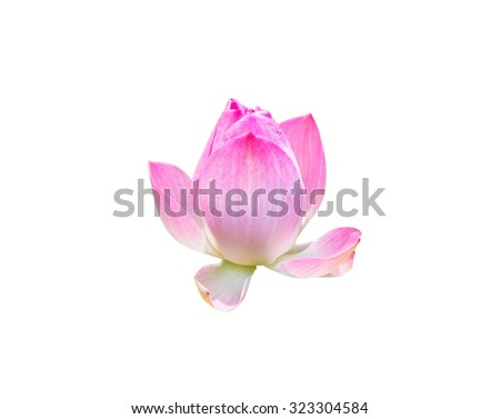Pink lotus bloom symbol of purity in asia white background - stock photo
