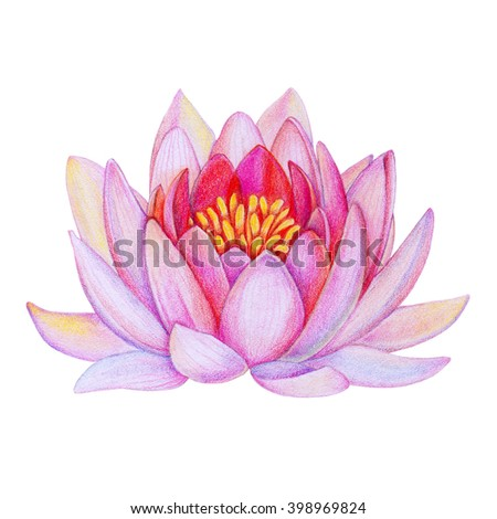 Lotus isolated on white back stock photo 57344200 shutterstock pink lotus flower isolated on white background close up illustration drawn by hand with colored mightylinksfo