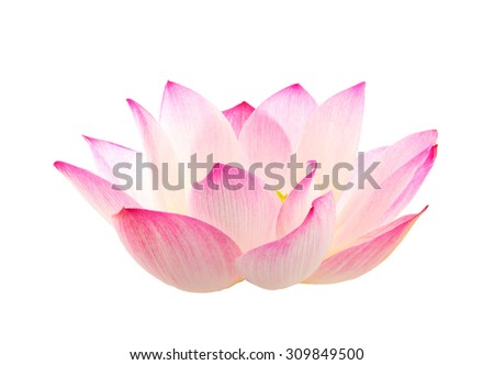 pink lotus flower on isolate background