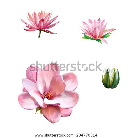 Pink magnolia flower, Pink flower, Spring flower. Lotus flower, water lily flower Isolated on white background - stock photo