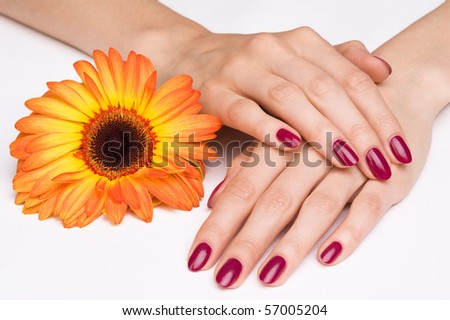 Pink manicure and bright orange flower - stock photo