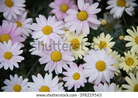 beautiful flowers in the meadow wild flowers field many