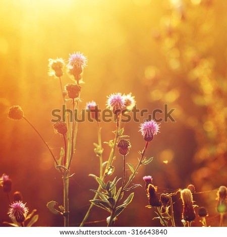 pink meadow wild flowers on yellow background in autumn field. Outdoor nature fresh photo