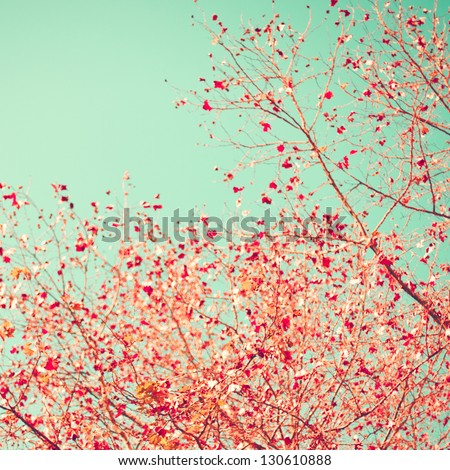 Pink nature on mint sky - stock photo