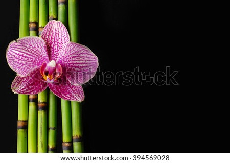 Pink orchid and bamboo grove â??black background - stock photo