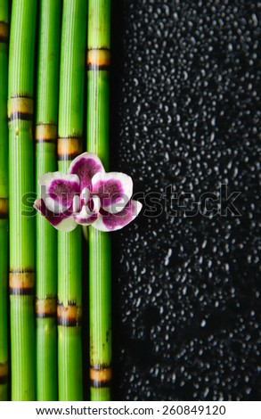 pink orchid and bamboo grove on wet background - stock photo