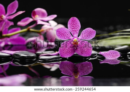 Pink orchid and green leaf with therapy stones - stock photo