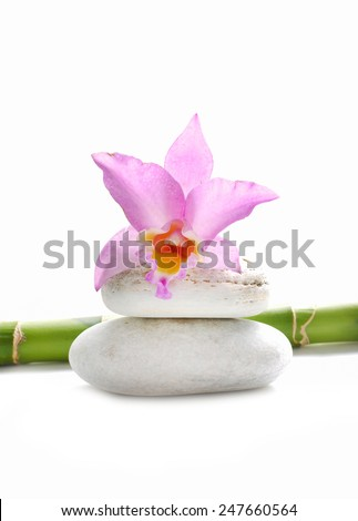 Pink orchid and stone with bamboo grove on white - stock photo