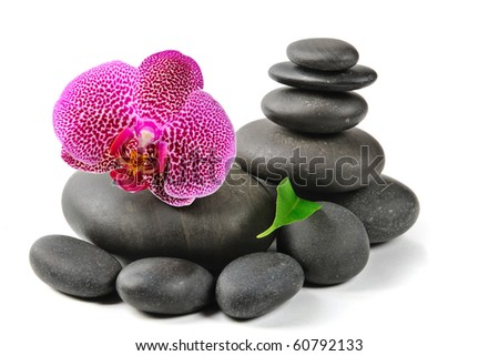 Pink orchid and stones on the white background - stock photo