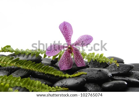 Pink orchid and stones with green fern on stones - stock photo