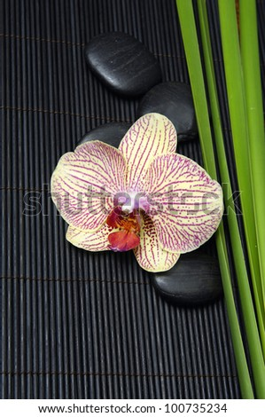 Pink orchid and stones with green plant on mat - stock photo