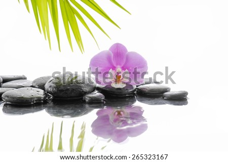Pink orchid and wet black stones with palm leaf
