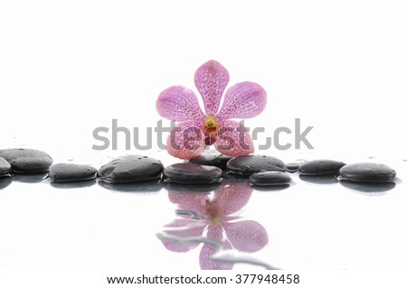 Pink orchid and wet black stones with reflection - stock photo